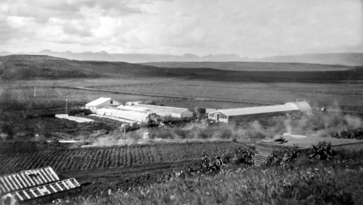 Hveratún skömmu eftir að Skúli og Guðný fluttu í Laugarás. Gróðurhúsið lengst til hægri var í eigu Ólafs Einarssonar, læknis.