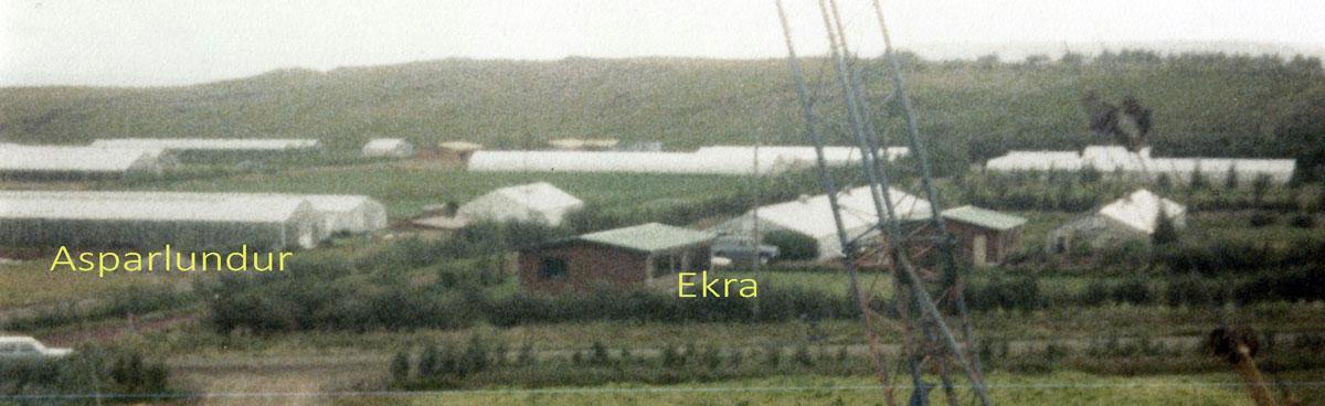 Asparlundur og Ekra 1982 (mynd pms)