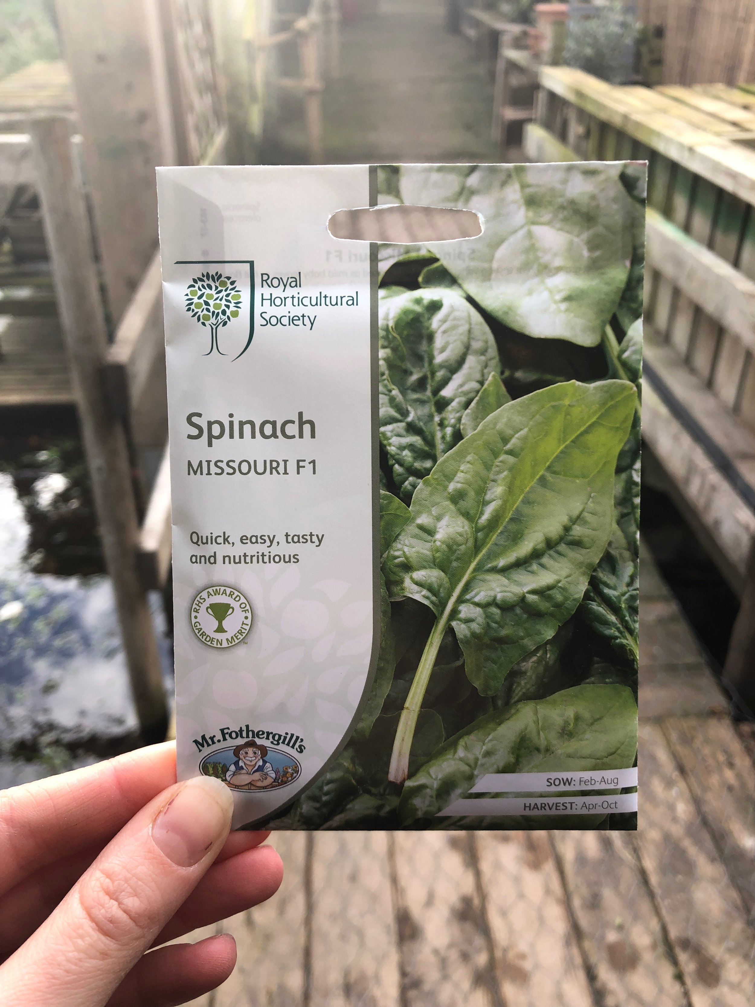 RHS Spinach seed packets ready to be sown