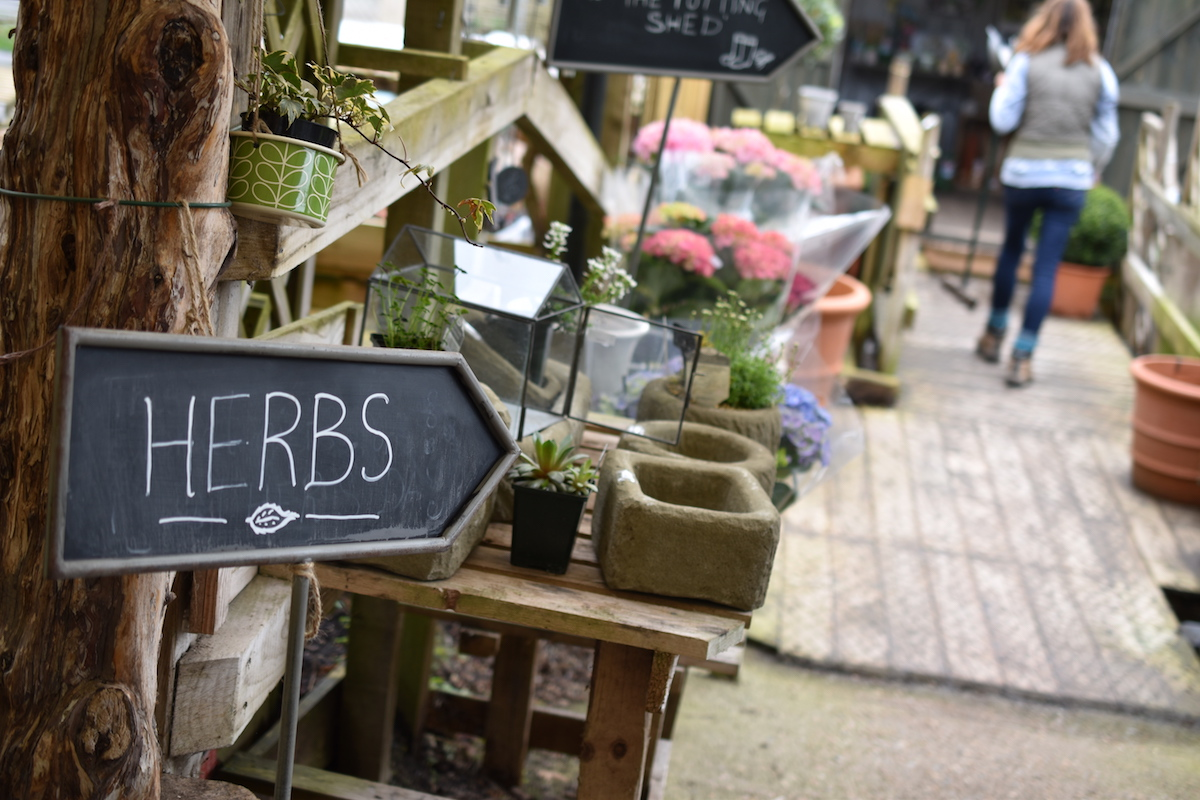 Off to the potting shed to buy some seeds