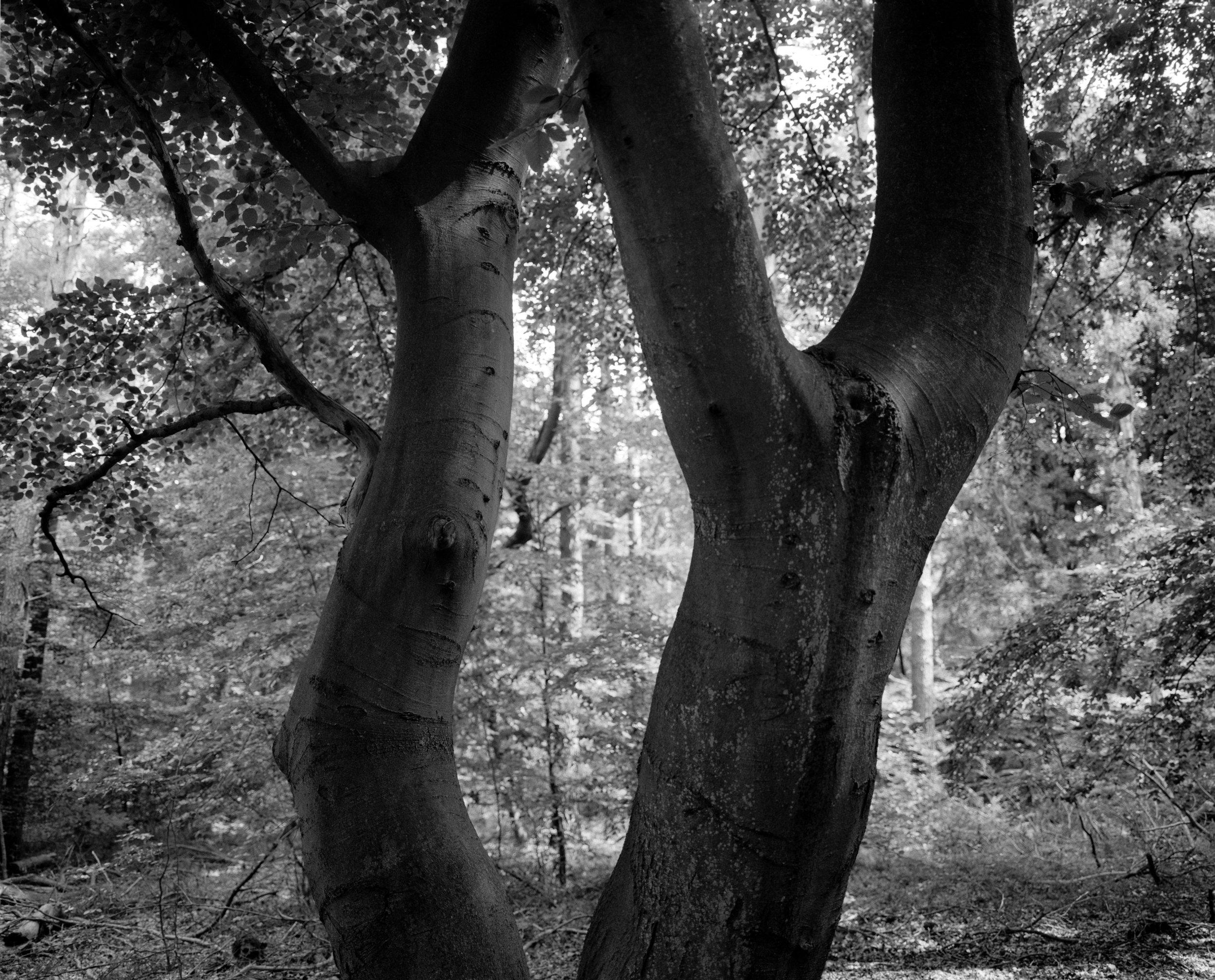 Wood5p.jpg