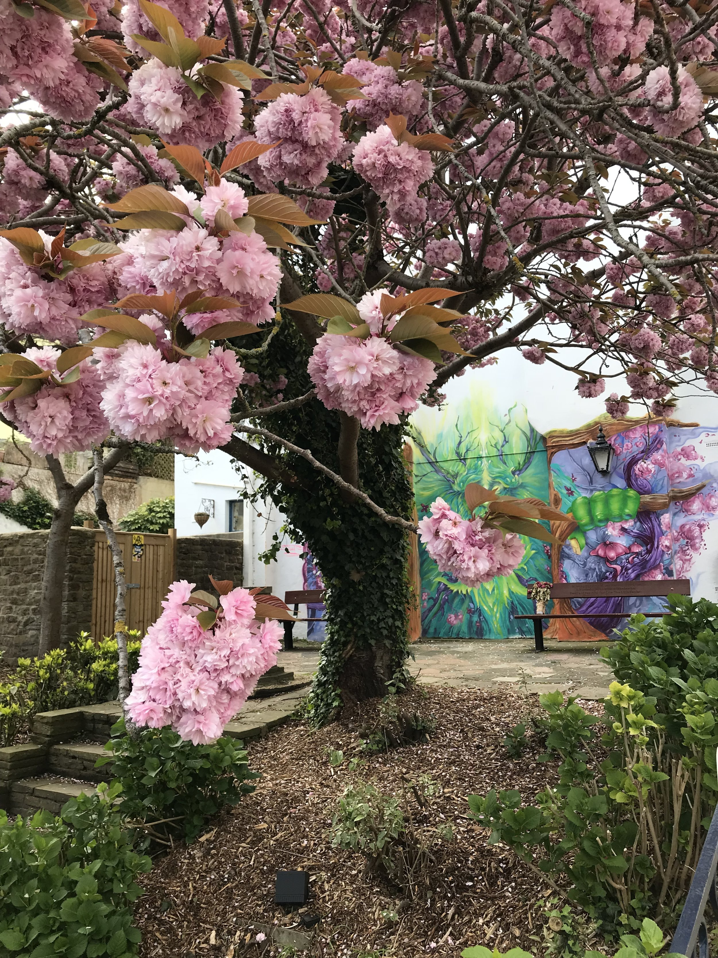 The blossom tree and memorial garden.