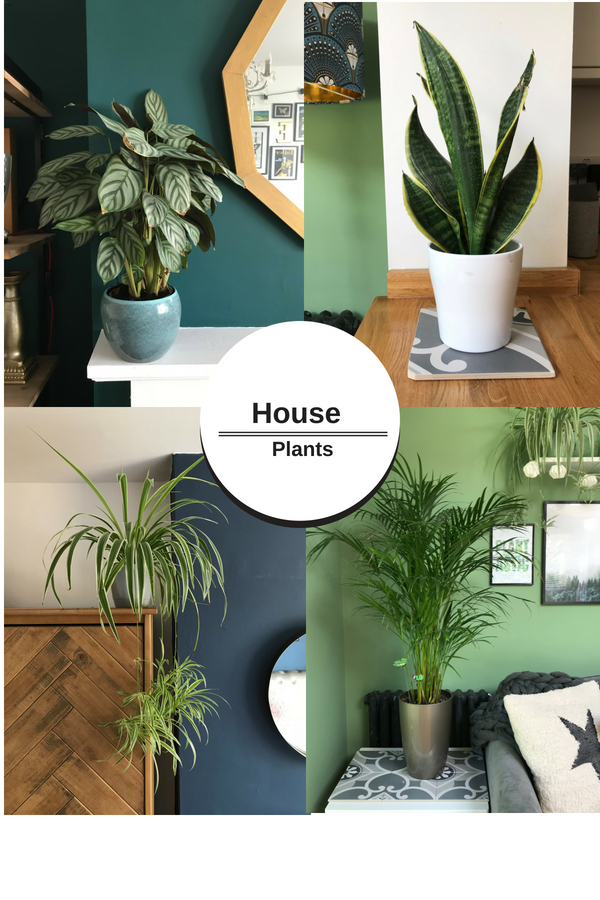 House plants (1).jpg