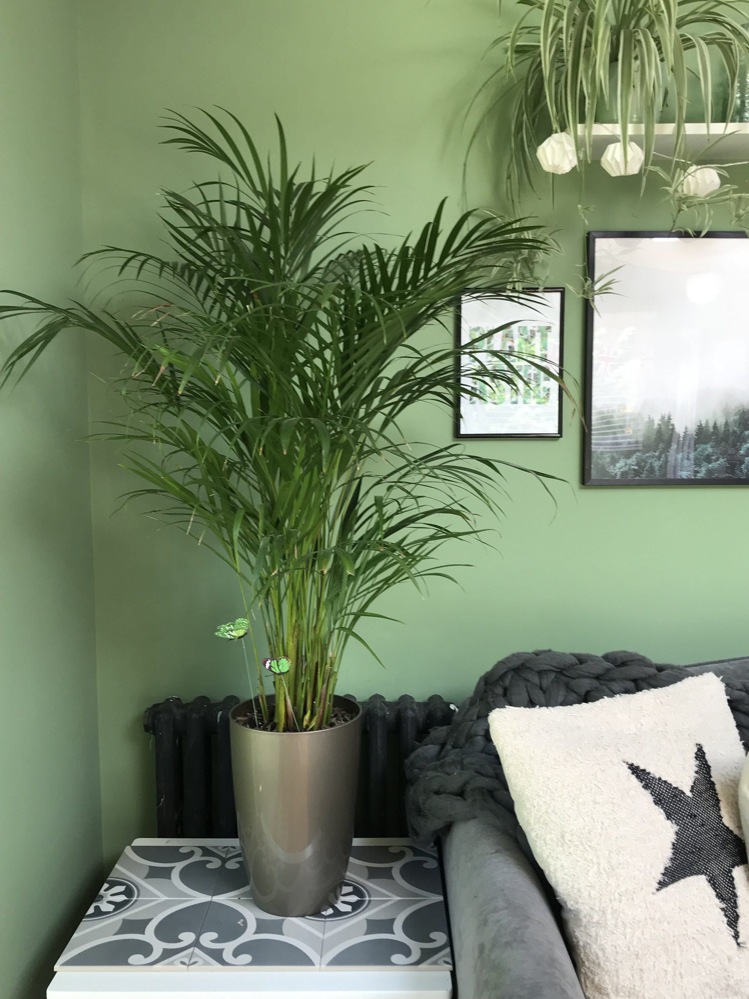 """My favourite """"tropical"""" plant"""