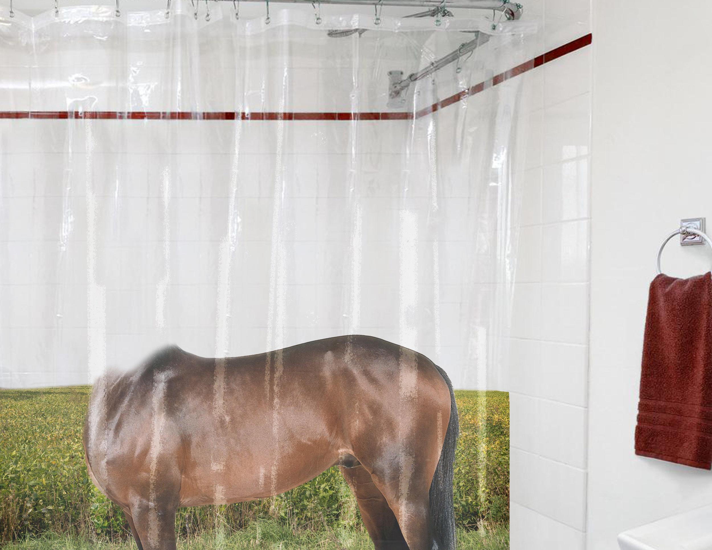 Showercurtain.jpg