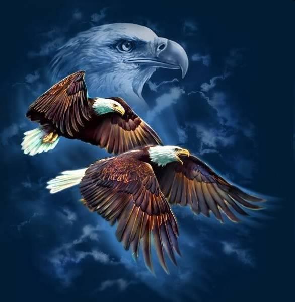 Eagles Flight Advocacy & Outreach