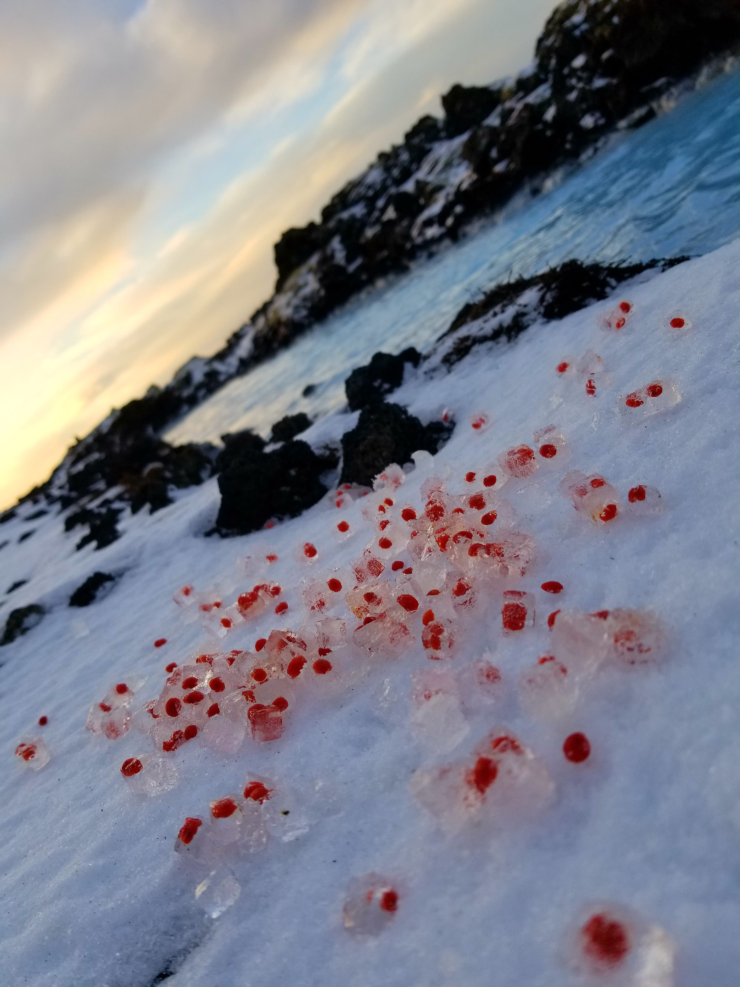 Ice embedded with berry, installed in situ at The Blue Lagoon, Nov 2017