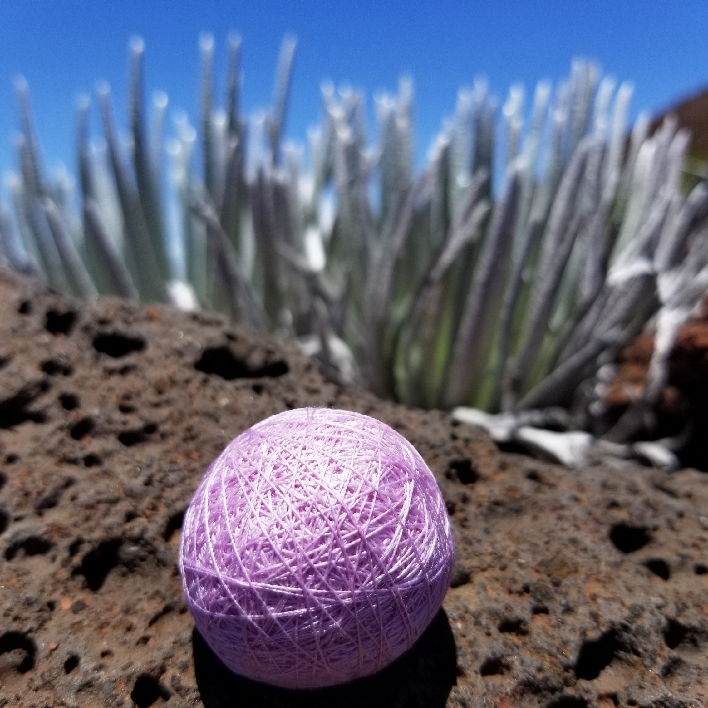 Silk thread orb installed at the driest place on Maui:  Haleakala Crater.