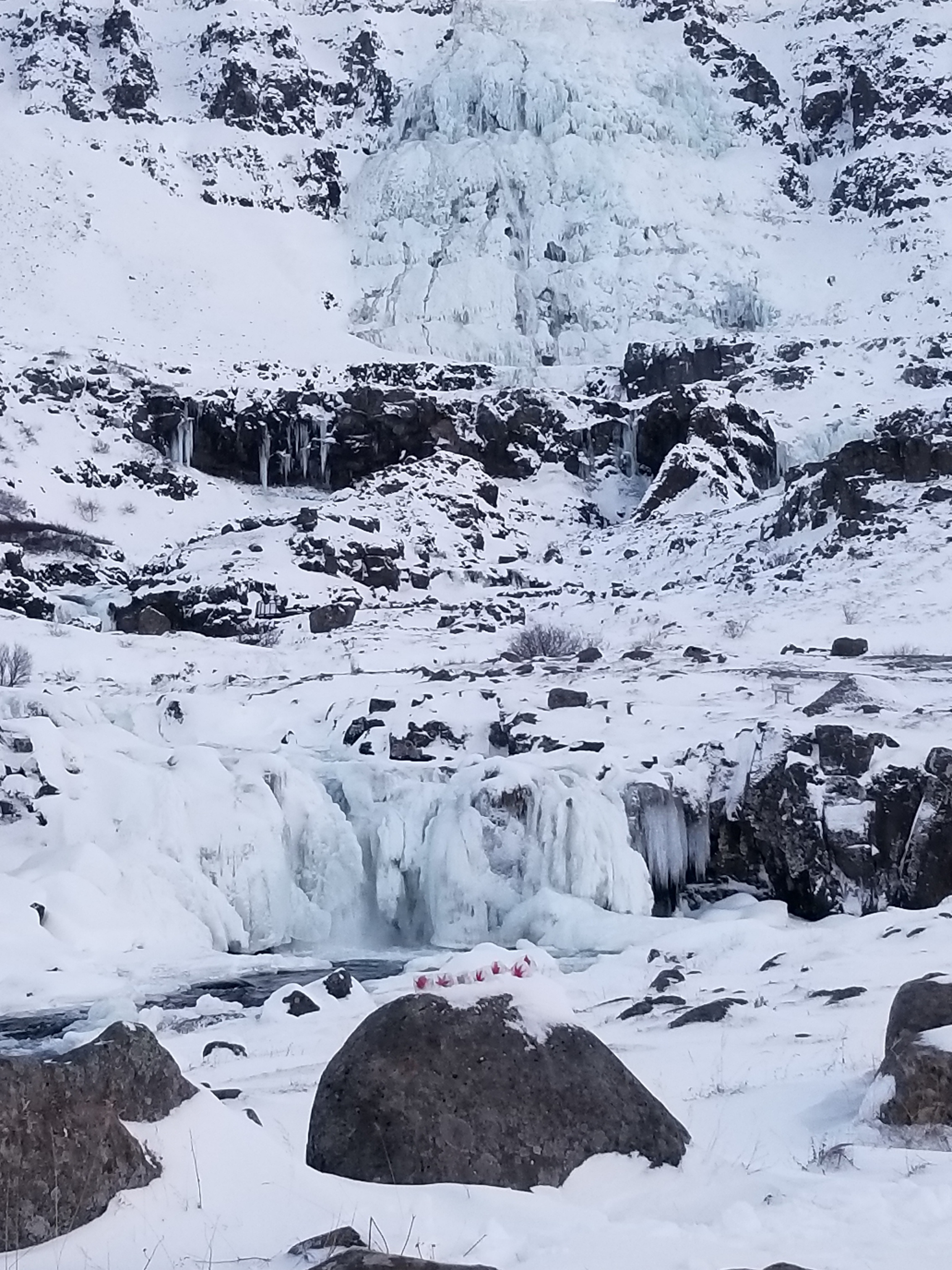 Ice embedded with leaves at the base of Dynjandi waterfall in Iceland, frozen above at 330 feet tall, November 2017.