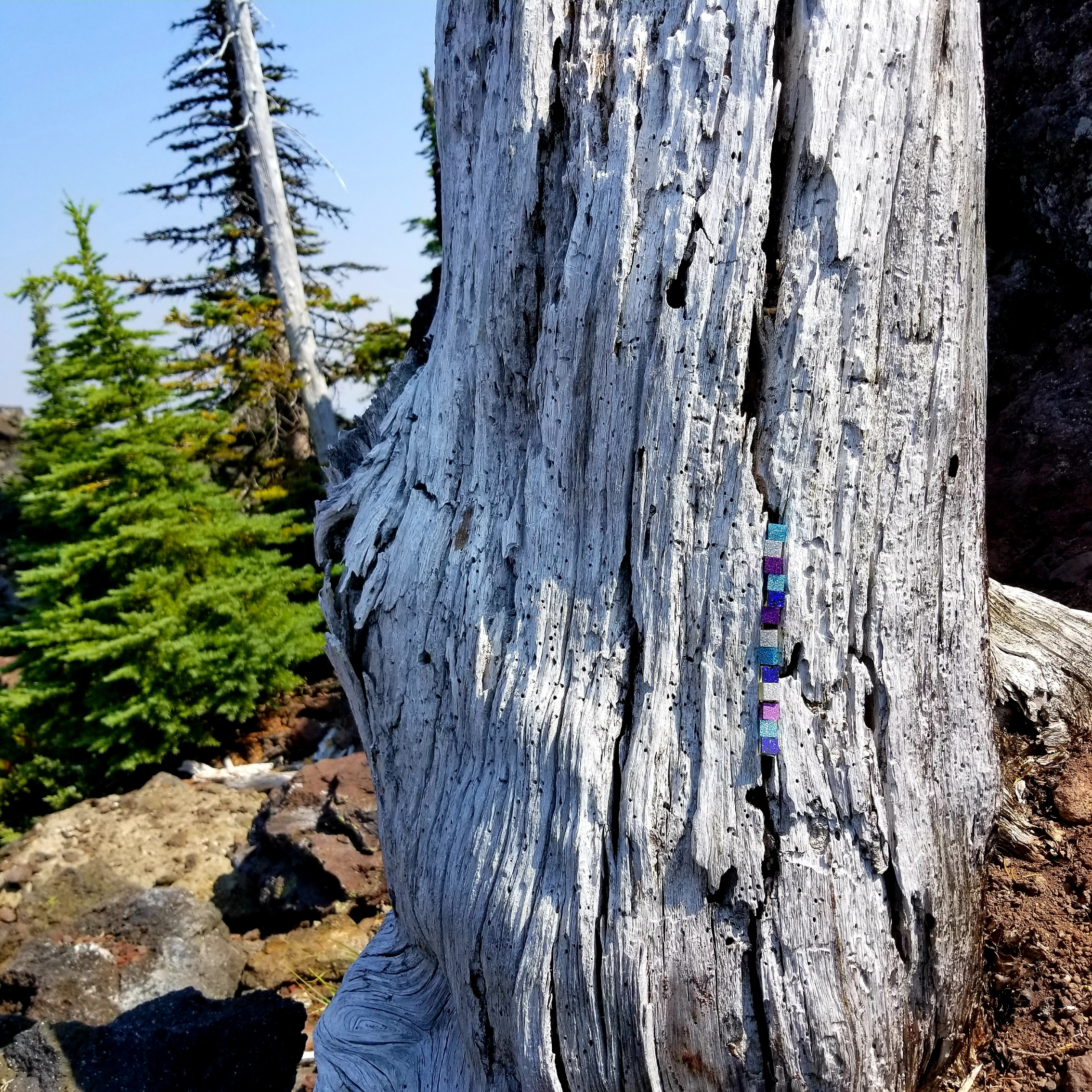 Glitter infused resin cubes installed in a Lodgepole pine setting up shop in a lava field on MacKenzie Pass in Oregon, August 2018.