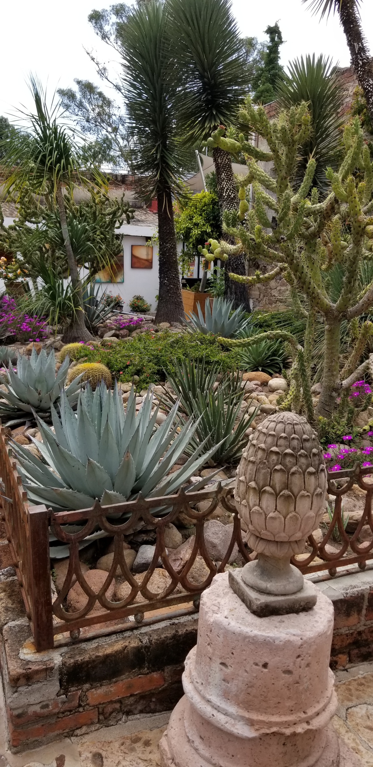 Cactus garden at Fabrica la Aurora in San Miguel de Allende where I will have a large scale installation in March, 2019. Hope to see you there!