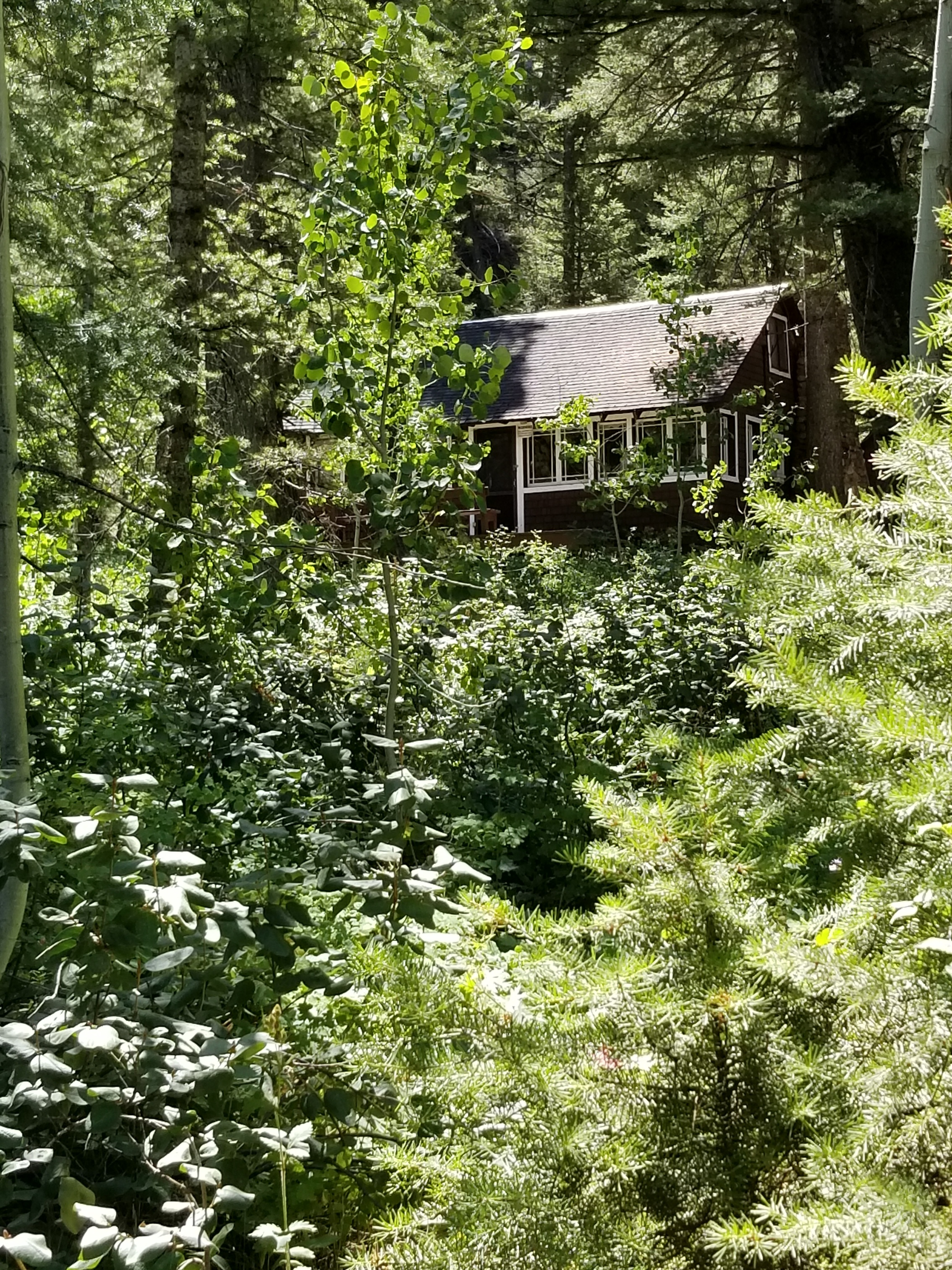 The rustic cabin my family owned near Easley Hot Springs where special memories were made.