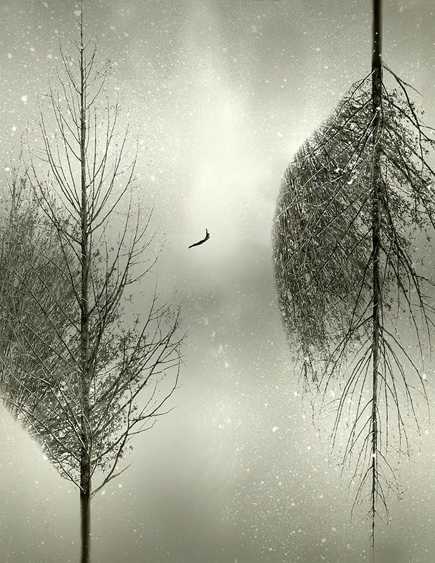 let_it_snow_4_x_5_web-618x800.jpg
