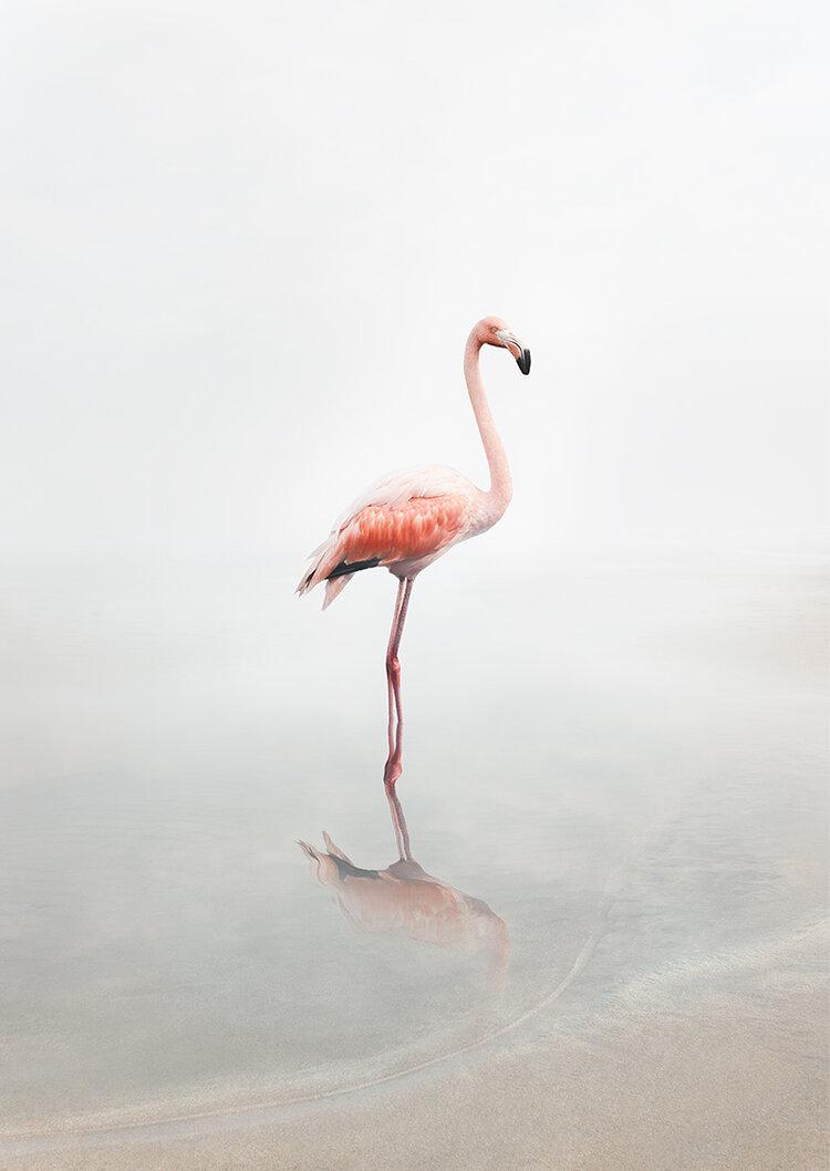 flamingo_alicezilbebrerg.jpg