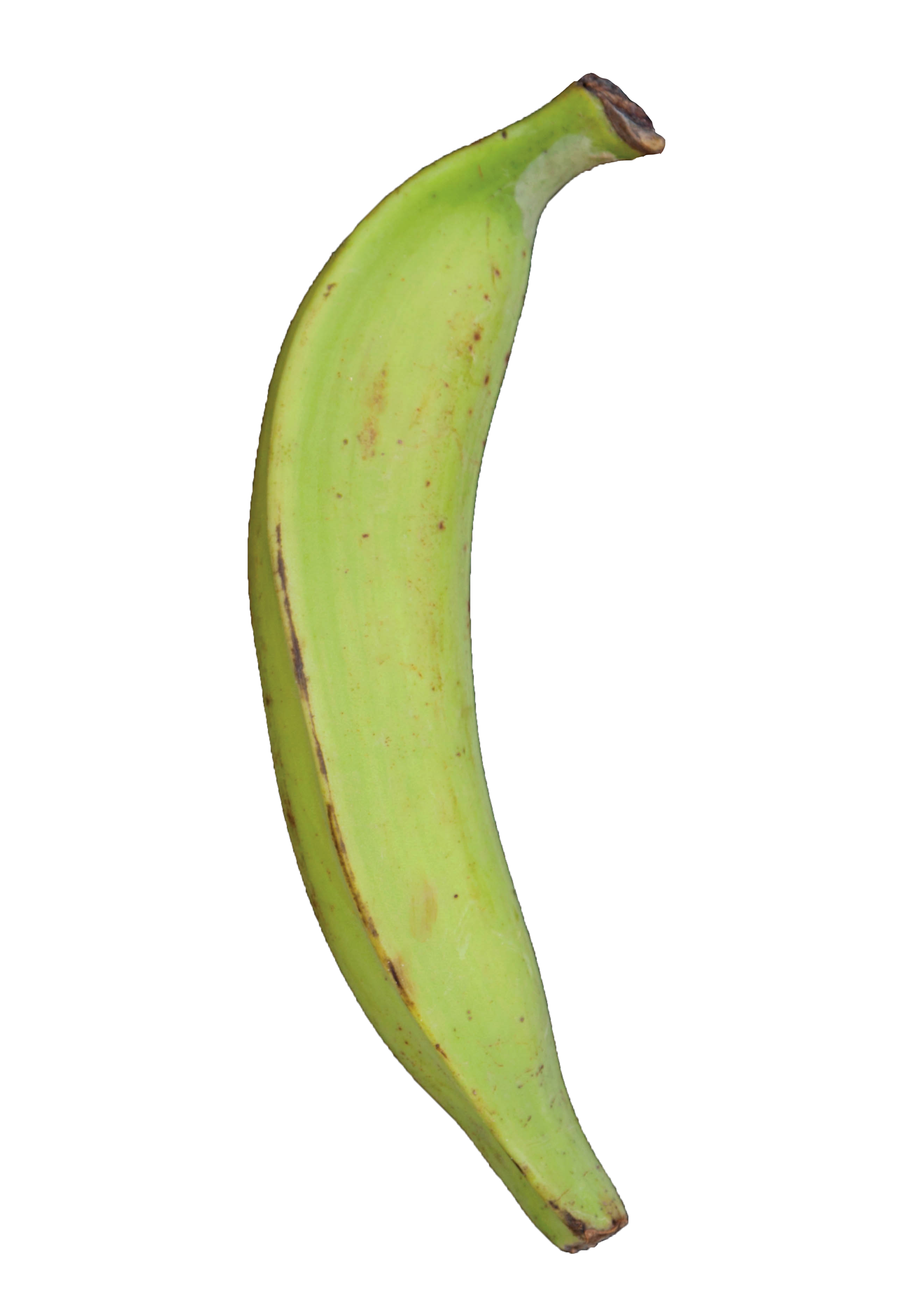Plantain Green Raw Dirt.png