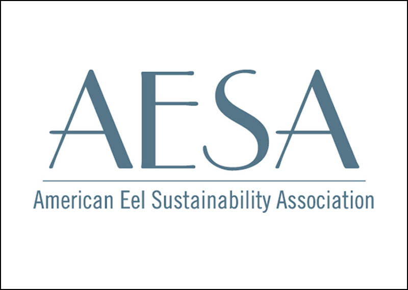 About the American Eel Sustainability Association   The American Eel Sustainability Association (AESA) represents fisherman, processors and others in the eel community who are interested in promoting the benefit of a long-term sustainable American Eel population through responsible fishery rules and habitat protection. The AESA acts as an information resource for its members and the public, is a forum to discuss key issues about the eel fishery, and uncovers the facts about news on the eel industry.