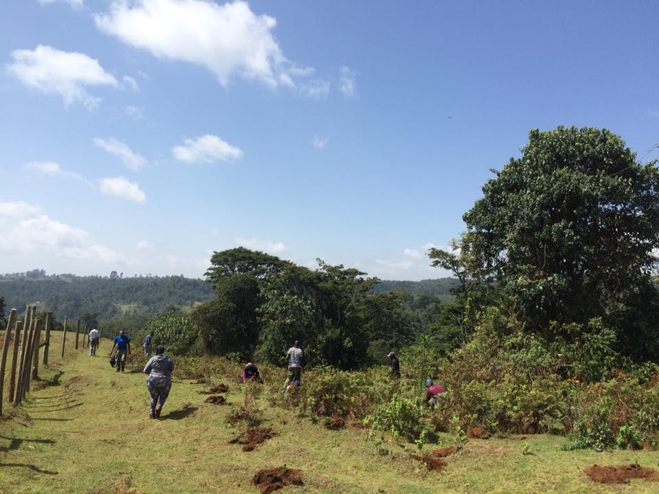 Hikemaniak - Hike & Tree Planting - Date 10/03/2018Location: Kihuri Forest AberdaresTrees Planted : 500