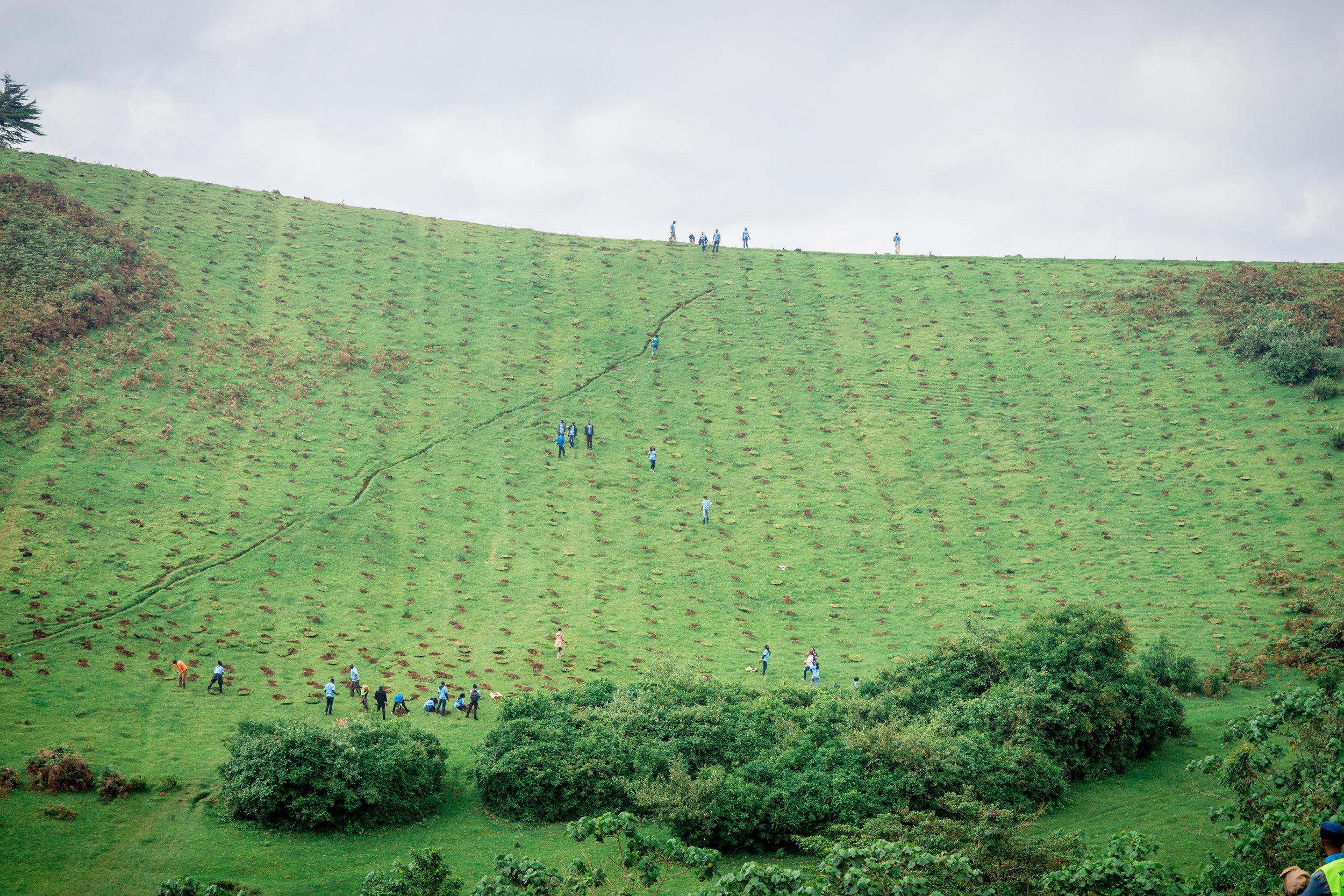 Citi GCD2018 - Date: 09/o6/2019Venue: Ngong road Forest Section 5 near Bomas of KenyaTrees Planted: 5000#GCD2019 #CitiVolunteers #TUNAPANDAMITI