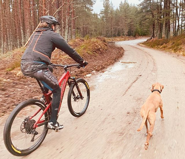 If ever there was a place for #mountainbiking, the forest of Badan Dubh could be it - and it's right on our doorstep... #cycleholiday #cairngormsnationalpark #insh #dogfriendly #selfcatering #selfcateringcottage