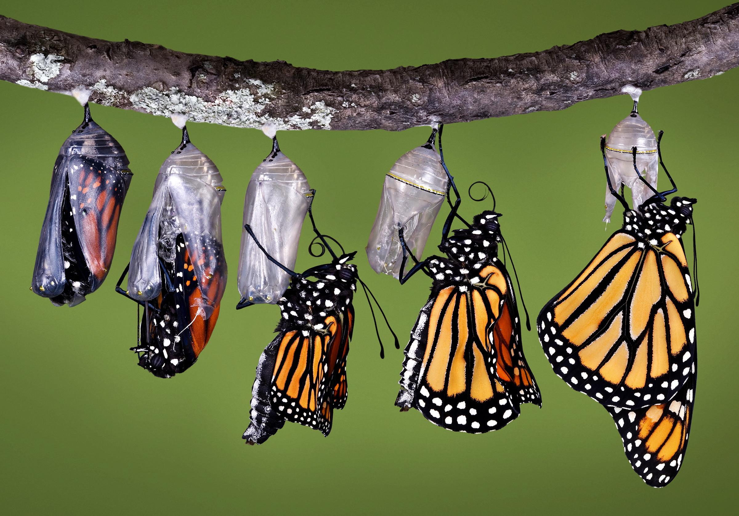 Viva Prana_Yoga_Bowspring_Wellness_Chicago_Blog_032918_Butterfly_1