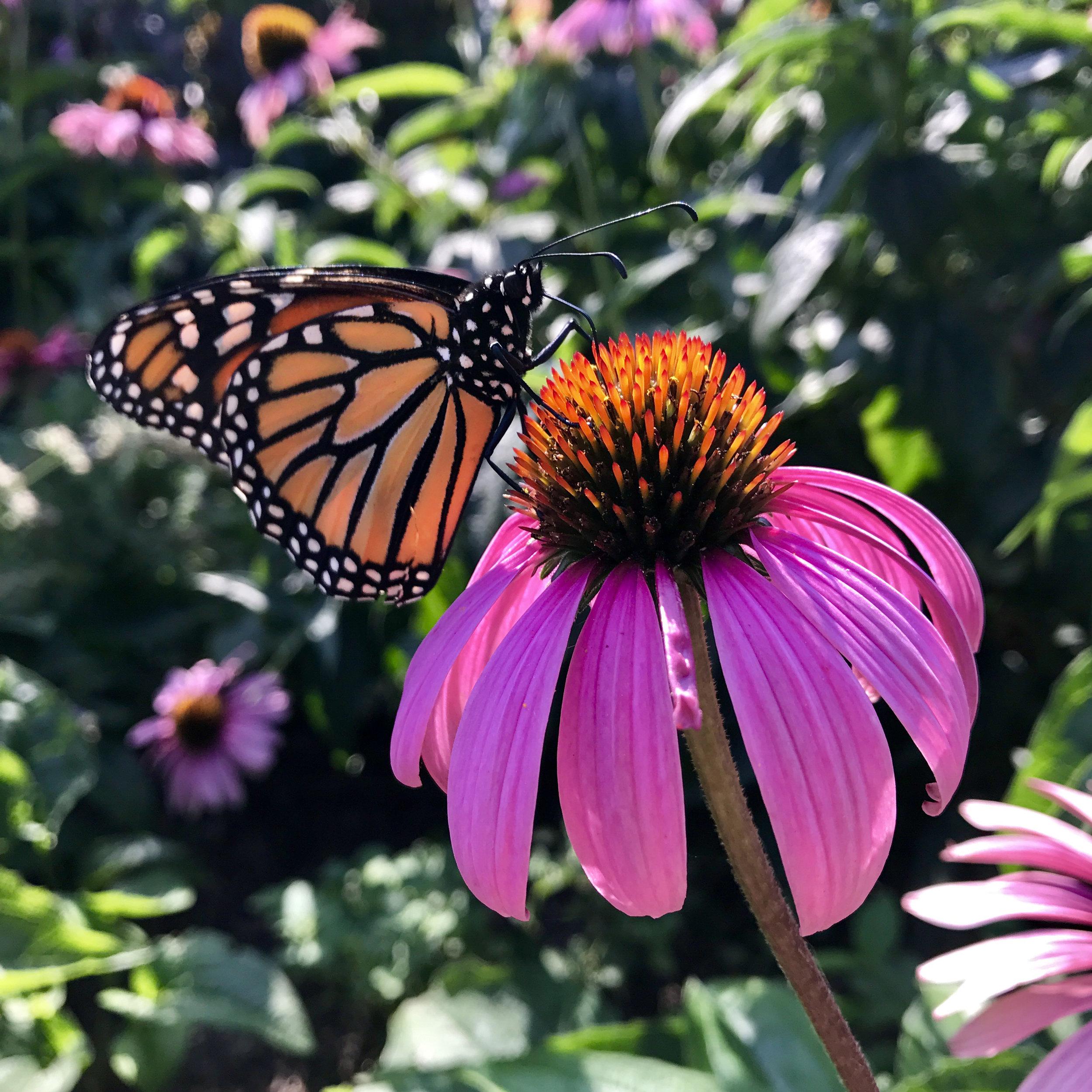 Viva Prana_Yoga_Bowspring_Wellness_Chicago_Blog_032918_Butterfly_2.jpg