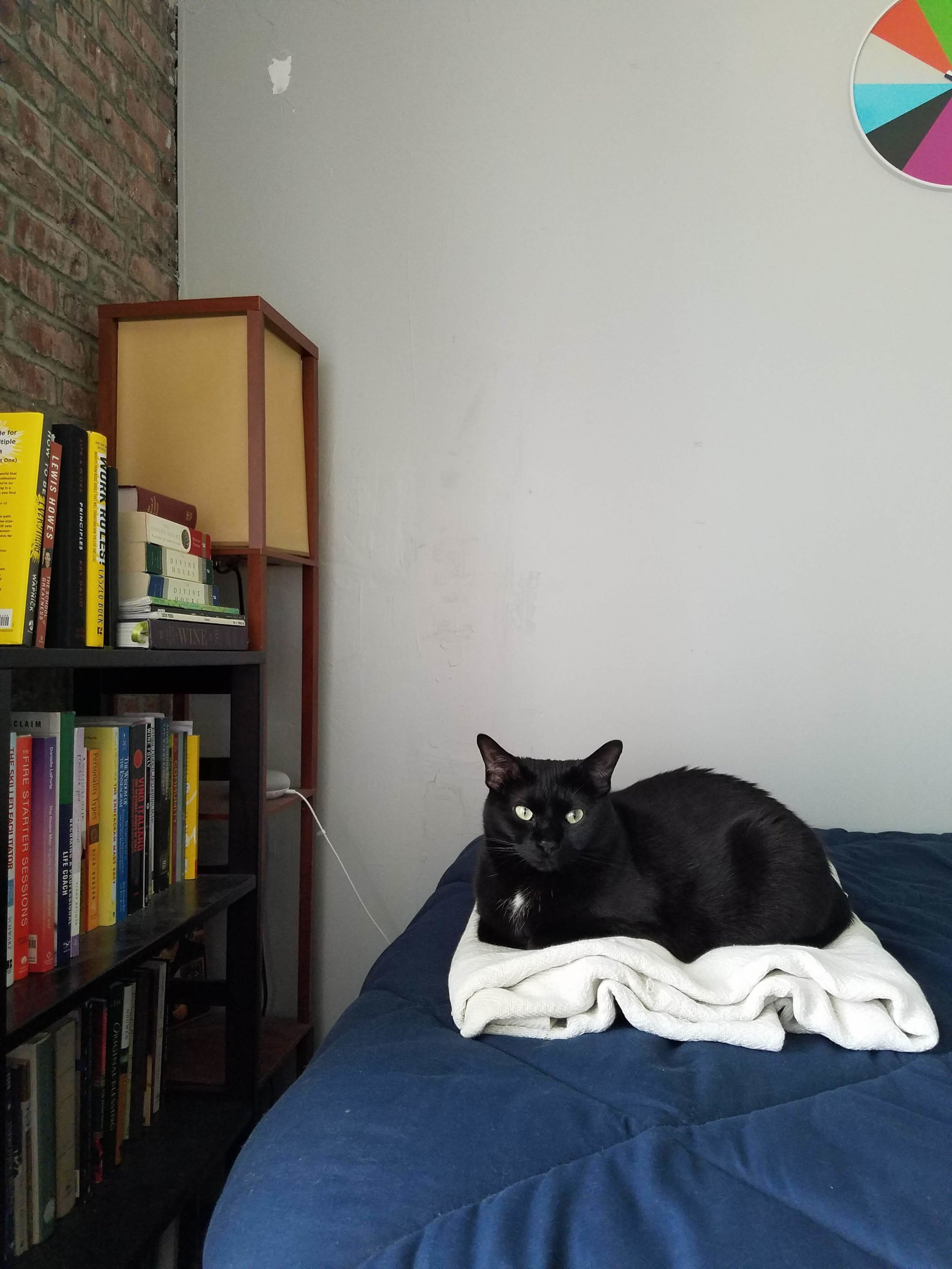 my cat daughter, liza - part sweet. part sassy.