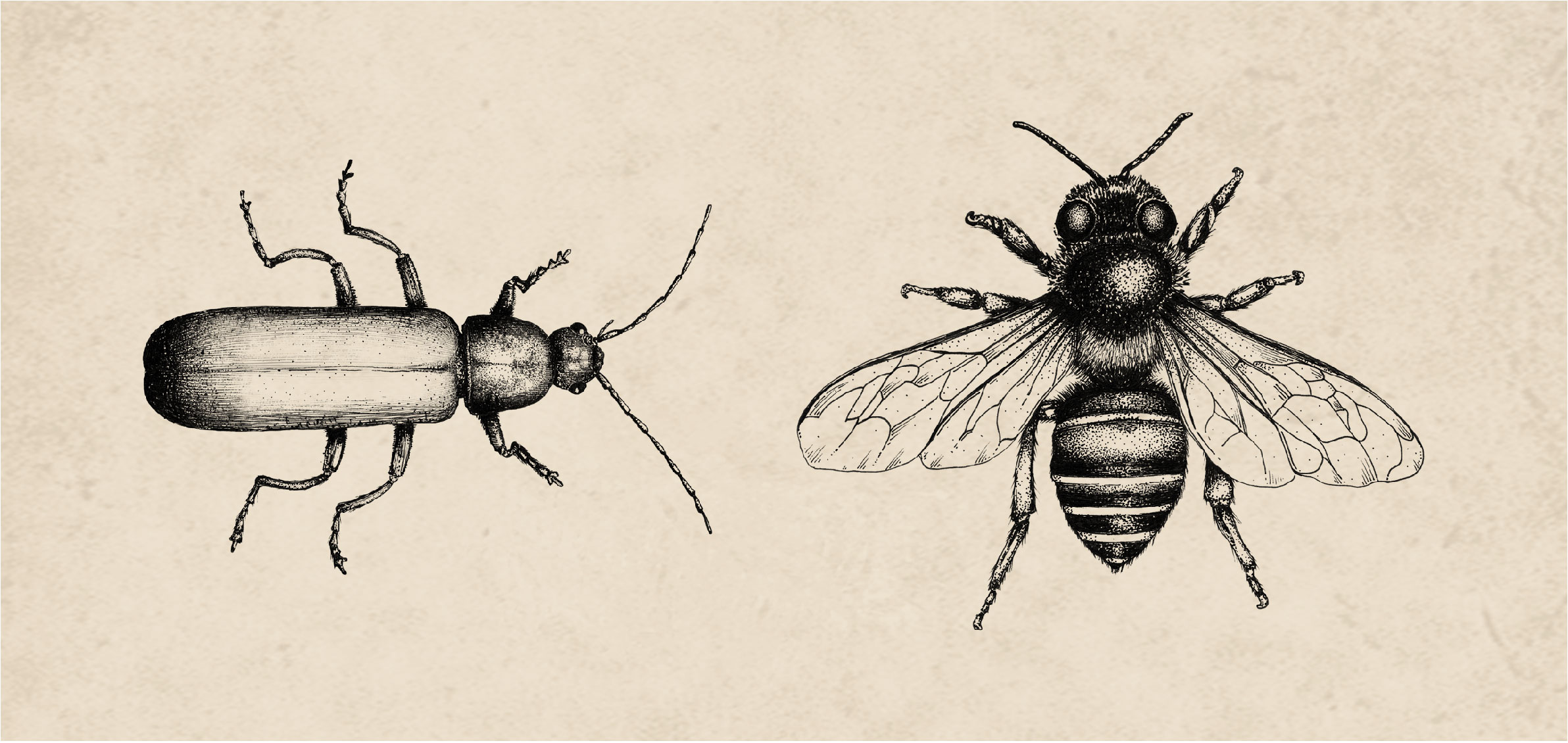 canada-post-hydrangea-stamp-bee-beetle-sputnik-design-partners-toronto.jpg