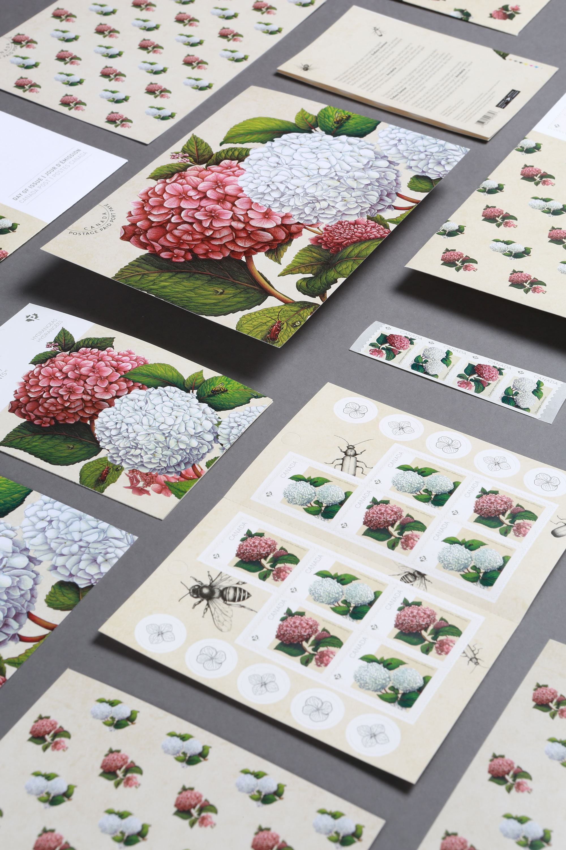 canada-post-hydrangea-stamp-4-sputnik-design-partners-toronto.jpg