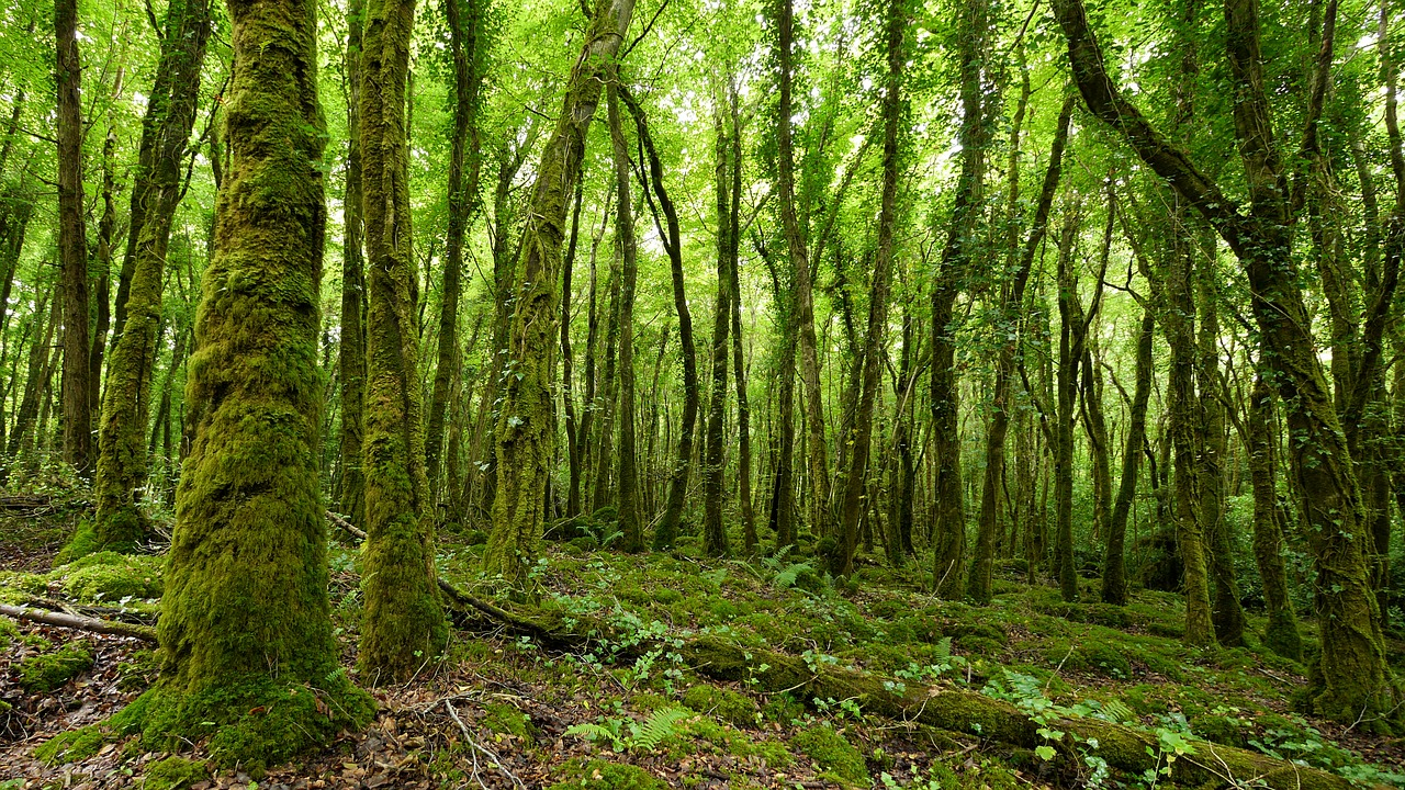 Many trees in Ireland get covered in Moss because of all the moisture, which explains why everything is so green.