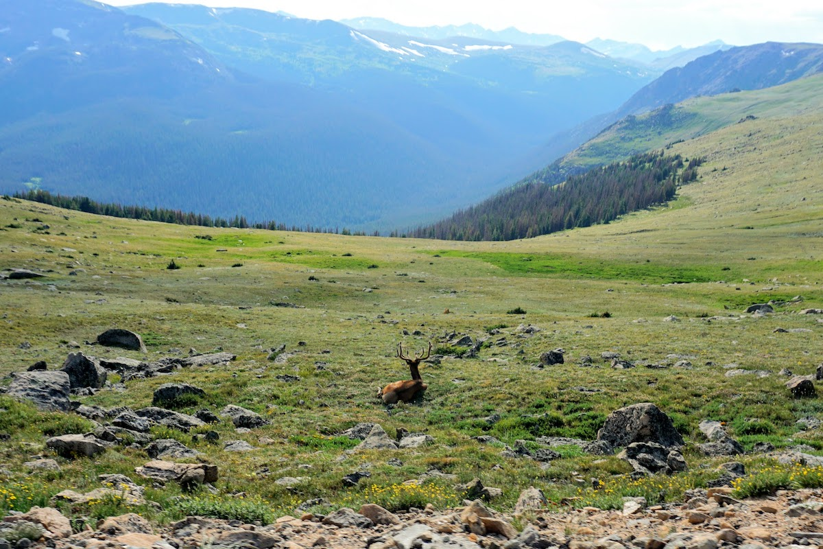 The Wildlife in Rocky Mountain National Park can appear when you least expect it.