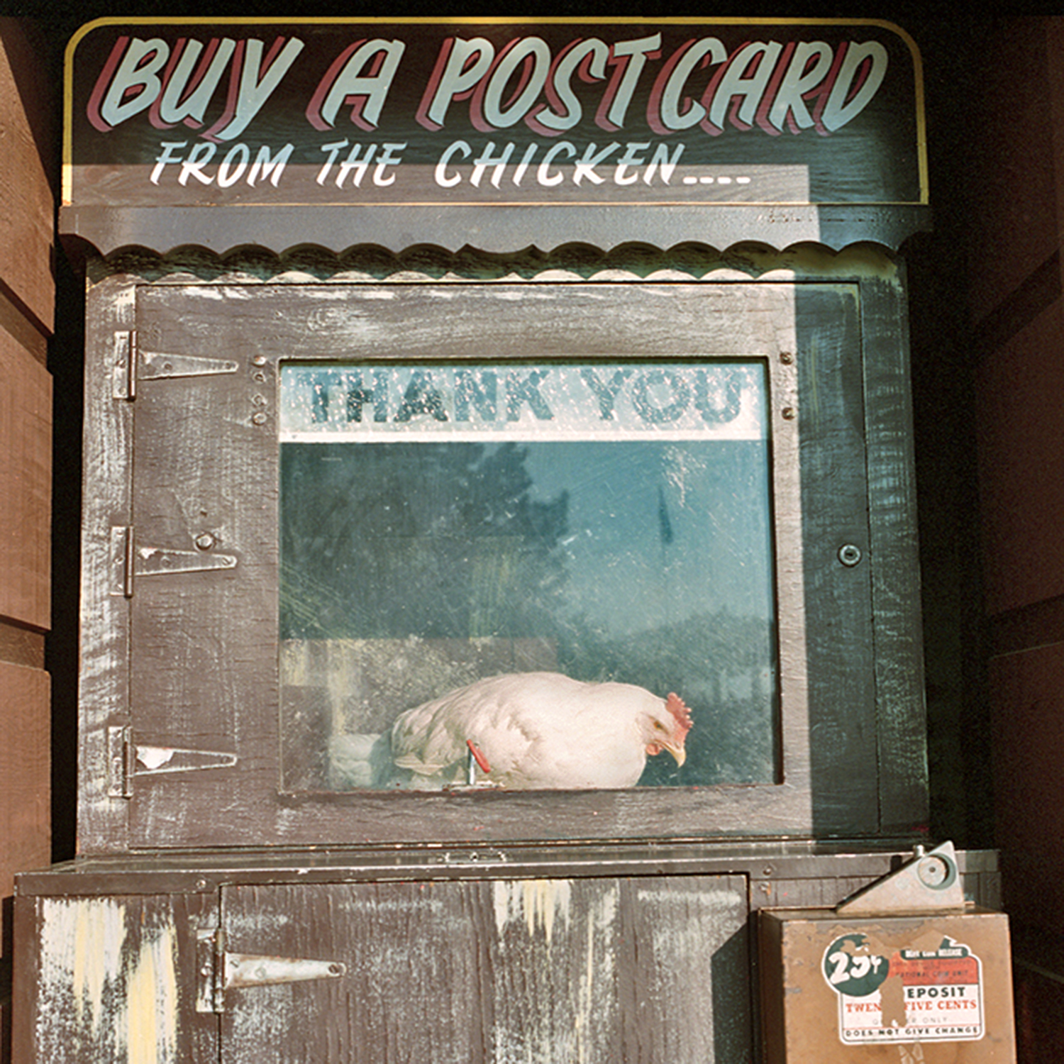 Paul Bunyan Land, Brainerd, Minnesota. August 1989. Amusement park next to the Paul Bunyan Motel that also included a colossal Paul Bunyan automaton that frightened children by recognizing them by name in a booming voice as they approached. This chicken is eyeing a food trough in line of sight with the coin drop; when I put in a quarter, the chicken pulls a lever that simultaneously releases food... and a postcard.