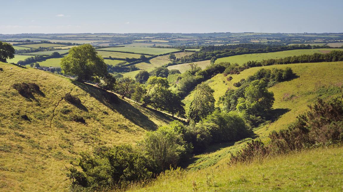 Molland-landscape-Loyton.jpg