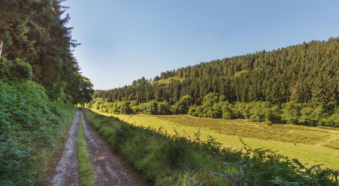 Molland-road.jpg