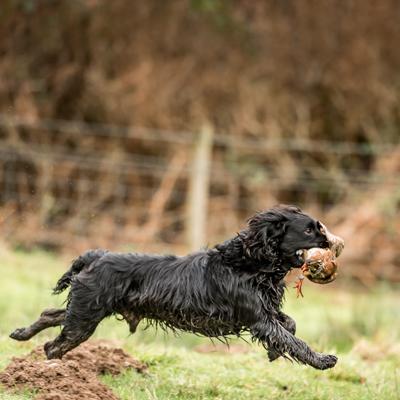 running-dog-kind-words.jpg