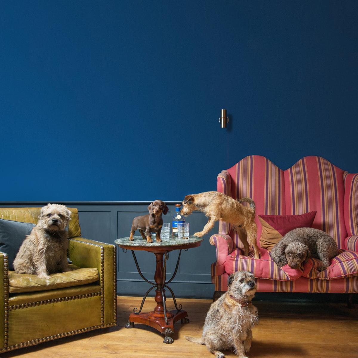 Loyton-Lodge-Doggies.jpg