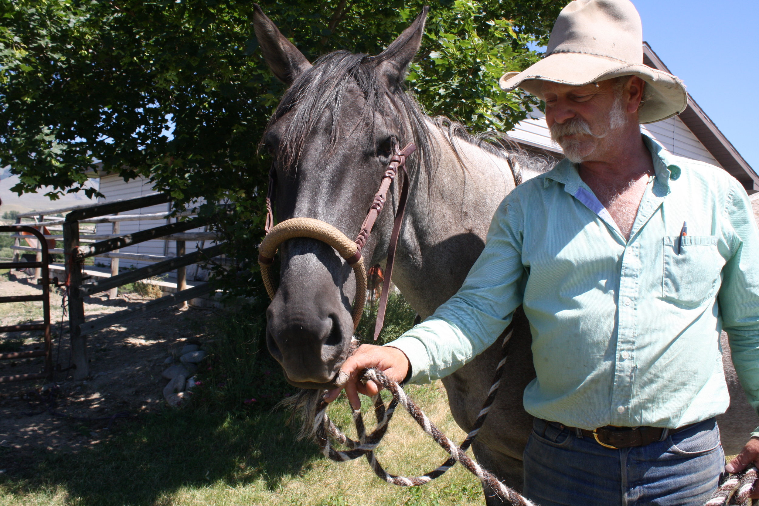 """Minor's horse """"Indy"""" is fitted with a hackamore Minor made from rawhide."""