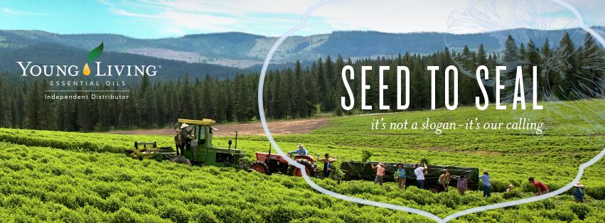 seed to seal 3.jpg