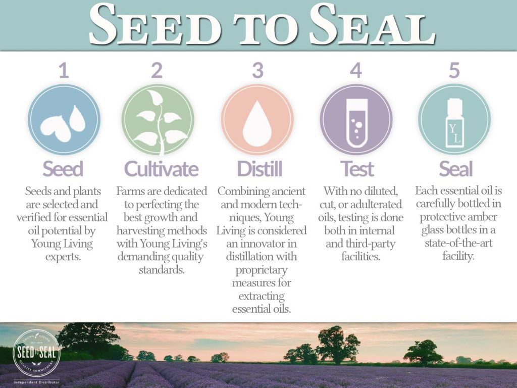 seed to seal 2.jpg