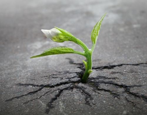 sprout-skeeze-pixabay.jpg