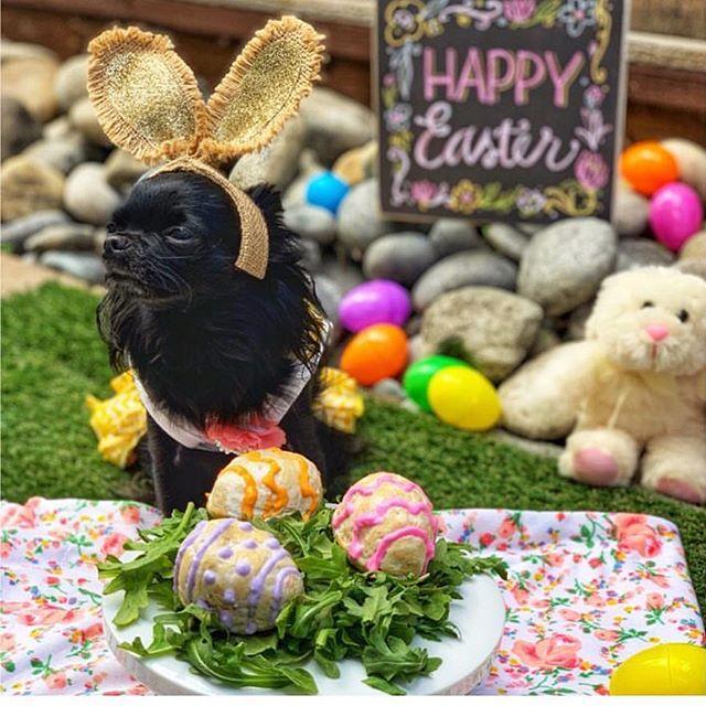 Hoppy Easter, everpawdy!! 🐰🐣💝 #easterpawty #bunnygirl #easterhunt @diorabelle #luckyscloset