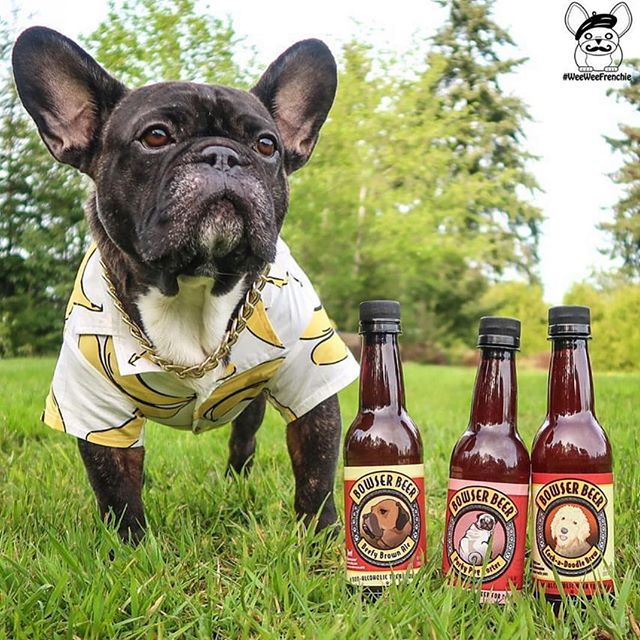Winesday Wednesday ... I mean beer... I mean... 🤔 #humpdayvibes #humpdayhumor 🍻 @weeweefrenchie ❤️ #luckyscloset