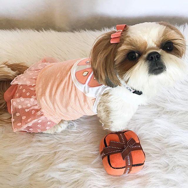 Orange you glad it's Friday?! 🍊 #readyforweekend #orangeisthenewblack 🧡 @fluffdogcrew 🧡 #luckyscloset