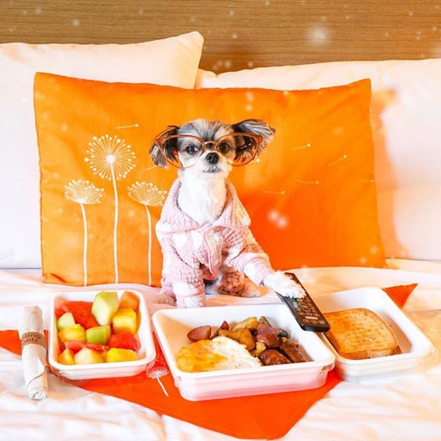 Breakfast in bed... yes please!! 🤗 @tinkerbellethedog #breakfastlovers  #luckyscloset