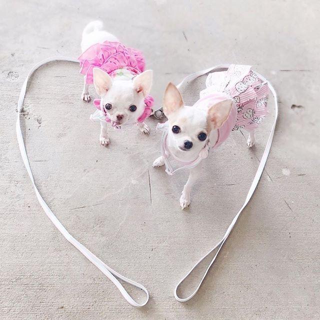 Wednesday love 💕 #humpdayvibes #luckyscloset @tinypetunias 😍