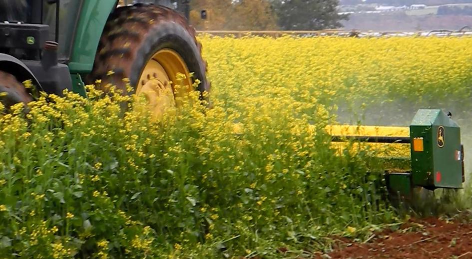 Crop-mustard (1).jpg