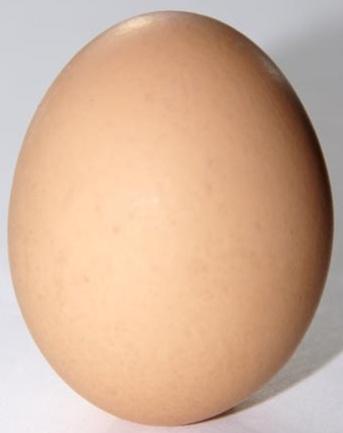 Egg oval shape