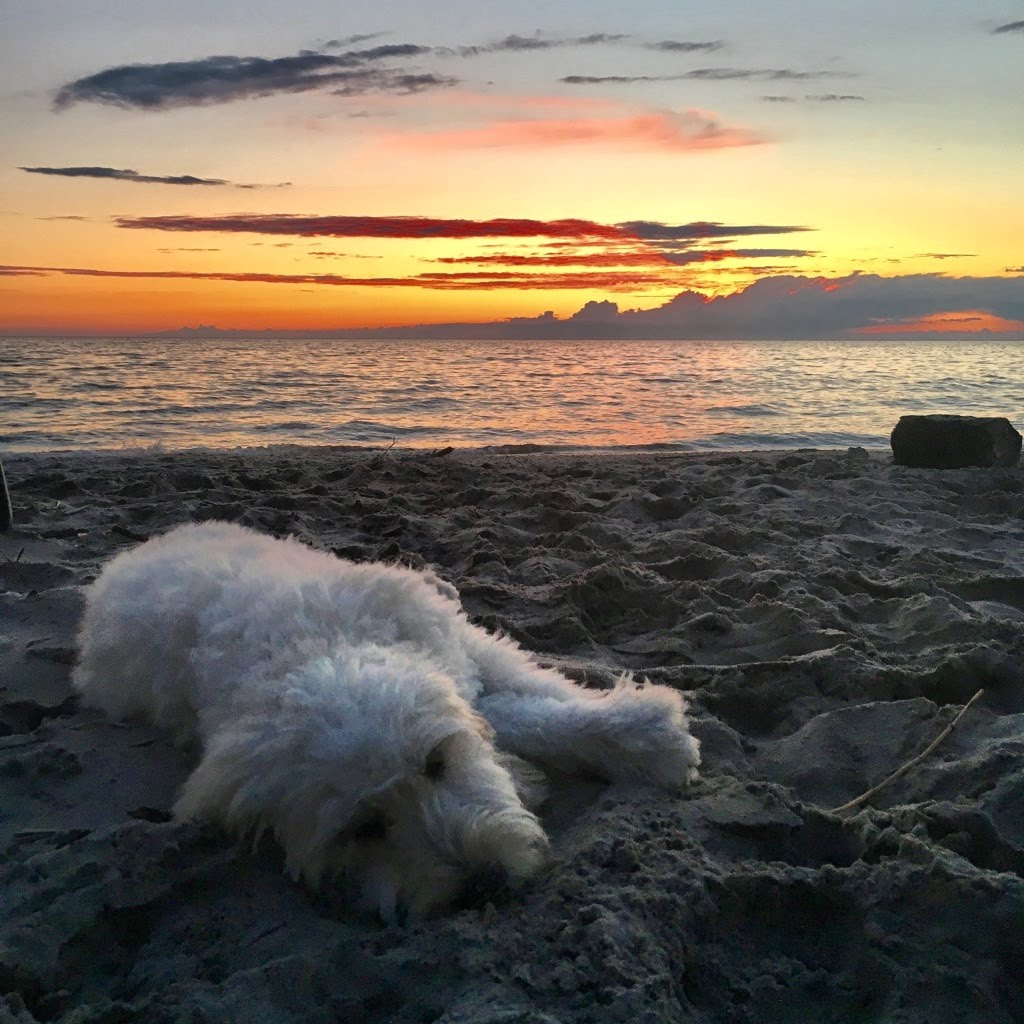 Dog laying on beach at Sunset