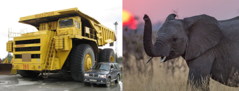 The BelAZ 75710 vs an elephant. Which one do you think is stronger?