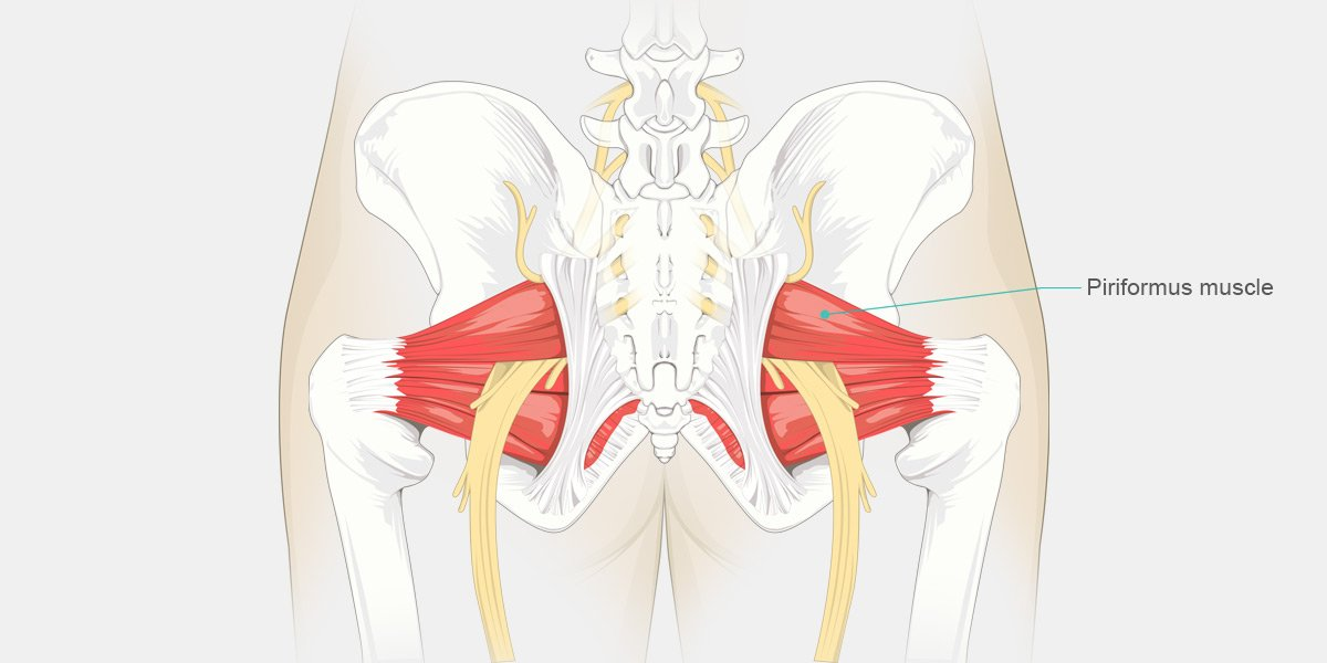 Source: http://onpointchiro.com/2017/06/27/condition-of-the-month-piriformis-syndrome/
