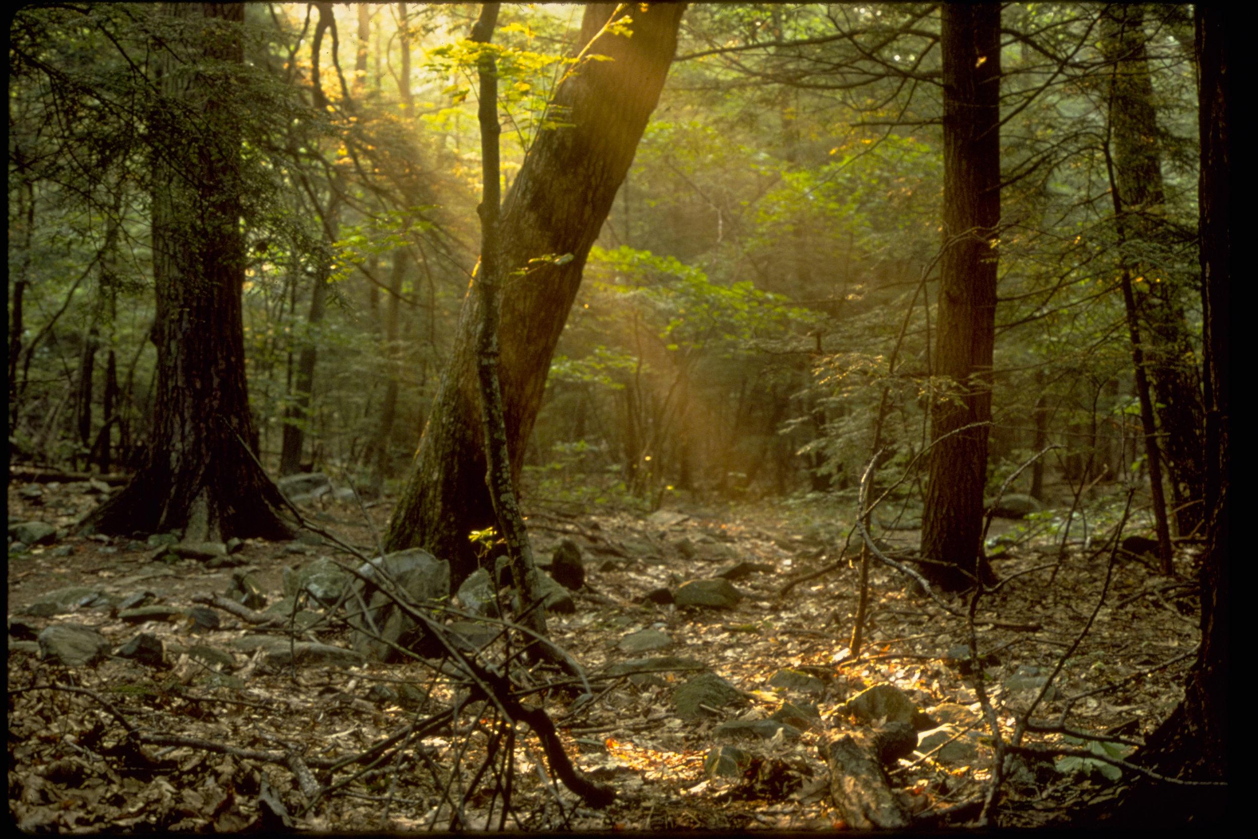 quiet-woods.jpg